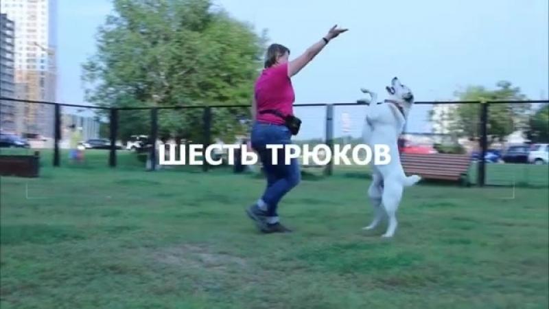 6_tricks