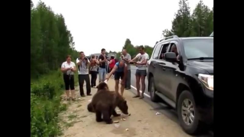 Медведи и дикие люди на трассе Ухта Сыктывкар