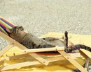 То чувство, когда даже котики отдыхают на море, а тебе завтра на работу