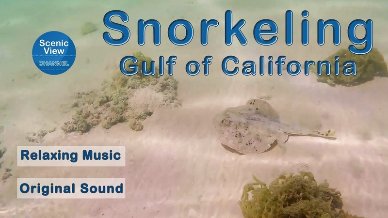 Snorkeling in the Gulf of California