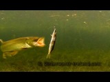 Pike attack / strike on a bait underwater super slow motion / GoPro. Рыбaлка: атака щуки под водой.