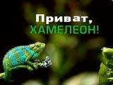ИНТЕР. ПРИВЕТ/ПРИВАТ ХАМЕЛЕОН. ФИЛЬМ О КОЛОМОЙСКОМ