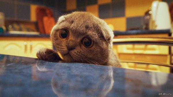 Котенок просит фото