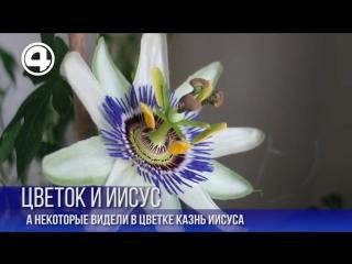 Цветок и казнь Христа