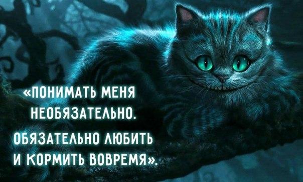 30 мудростей Чеширского Кота: ↪ И в каждой — капелька безумия.
