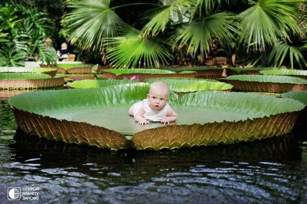 Местность в бассейне реки амазонки в