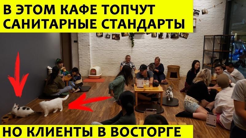 Пушистый секрет: как открыть 20-е кафе на районе и не разориться