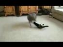 Котейка наказывает волчару