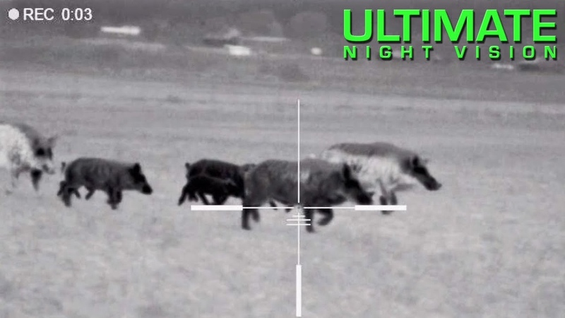 125 Hogs Down with the Pulsar Trail XQ50 XP50 | Hunting with Thermal