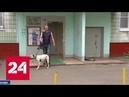 Нападение бойцовой собаки в столице хозяин задержан, а потом отпущен
