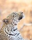 Стив Ирвин стал фотографом и зоологом в 14 лет, и его снимки просто потрясающие
