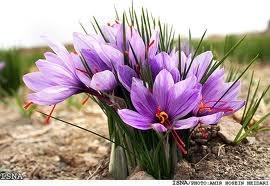 чернаямагия - Магия растений. Магические свойства растений. Обряды и ритуалы. Амулеты и талисманы из растений.  CXYYBw5xEGE