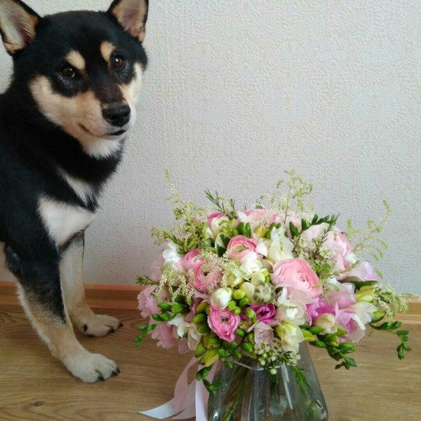 фото из альбома Екатерины Щёголевой №8
