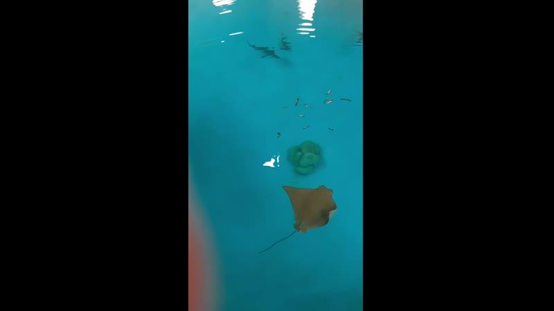 акулы и скаты обедают