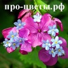 Все про цветы и букеты - фото цветов, описание,