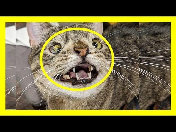 Кошка с синдромом Дауна, стала звездой Сети!