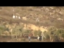 Herd of terrorist Jewish colonists attacking farmers olive trees South Nablus, documented by Yesh Din, Palestine, 14 Oct 2018