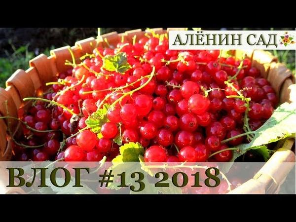 Влог 13 Теплица / Горох / Смородина / Домик