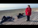 Взвешенные и счастливые тюлени в Сочи