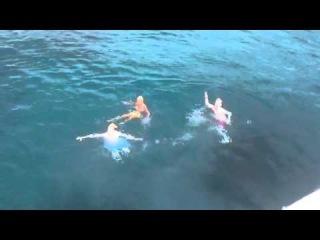 Jedward and Tara Reid Take a Dive in Ibiza