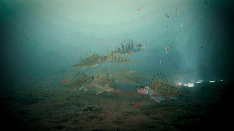 На ГИДРОПЕРИТ прёт рыба Проходят тысячи рыб пока он выделяет кислород