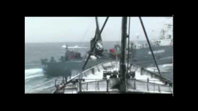 The Whale Wars - Elca Maranzana and Eamon Anderson