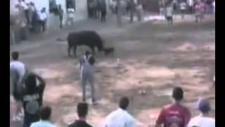 Бультерьер спасает тореадора от быка