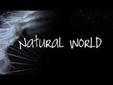 David Attenborough - The Real Jungle Book Bear - BBC Natural World HD