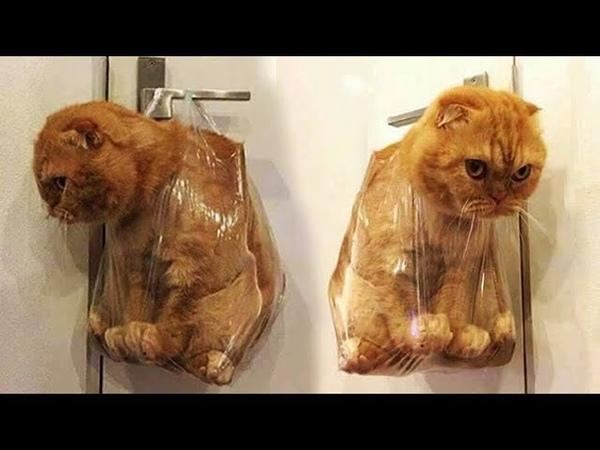 «Симпатичная кошка» старайся не смеяться - попробуй самый смешной фильм кота