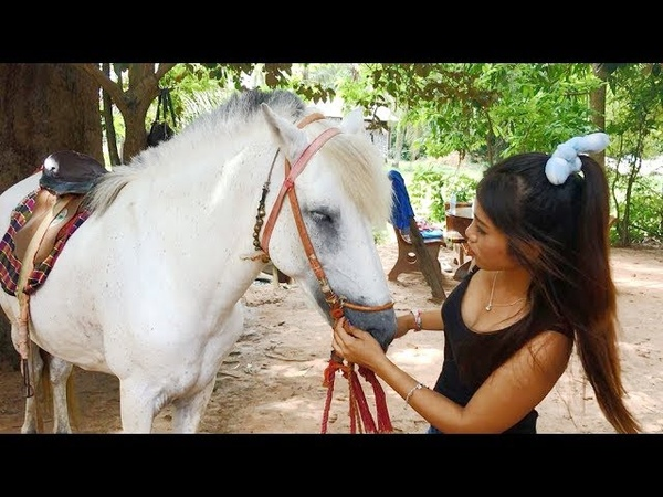 How To Make Up Horse Before Riding Training Horse By Cambodian People Feeding And Making Food Horse