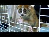 Лори самые милые животные в мире