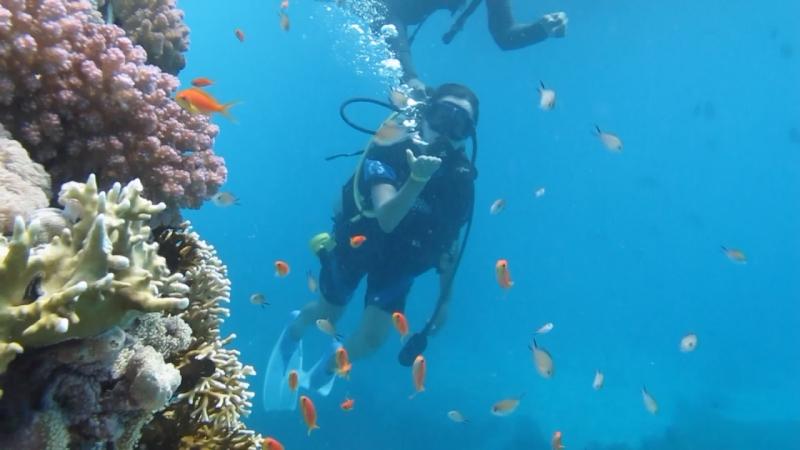 Подводный мир Красного моря 😍