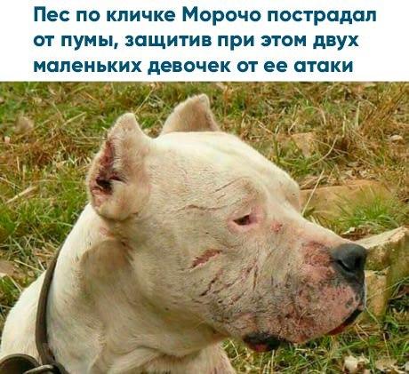 Фото №456318900 со страницы Катерины Мироновой