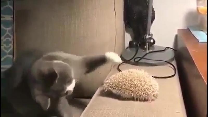 Гюльчатай! Личико покажи?