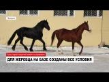 Где живет конь, напугавший водителей на промзоне?