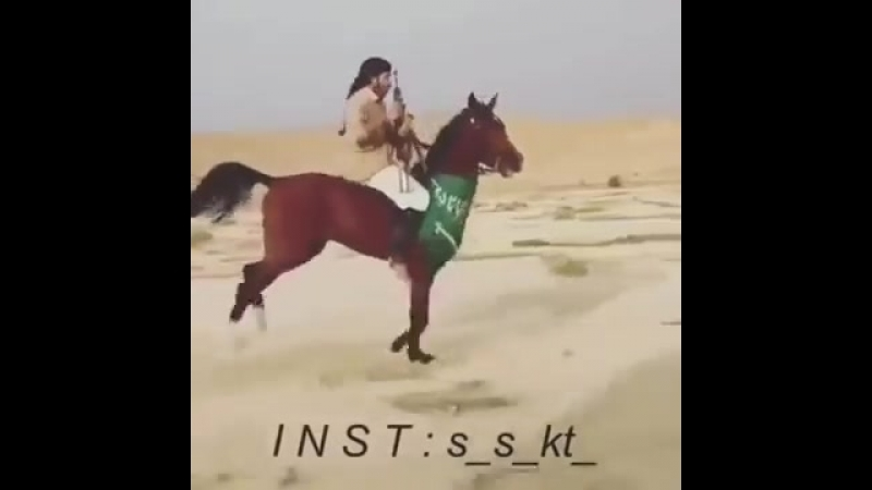 Арабский скакун. Красота