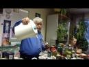 Чайный Мастер Шандыбин В.П. играет на струнах души...