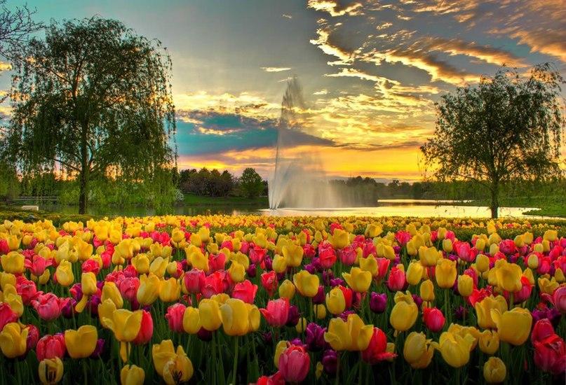 Spring time ... V2ogyrhC200