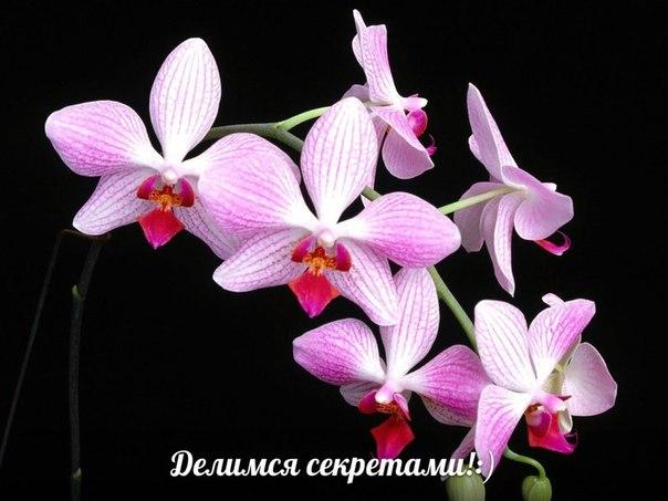 ❓🔸🔸🔸 🌻 🐝 🌻 🔸🔸🔸❓ Секреты цветения. Орхидея Как ухаживать, чтобы добиться цветения? Делимся секретами! :) Заходите, обсуждайте 👉