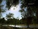 Даймонд Ружья микробы и сталь 3 В тропиках sl