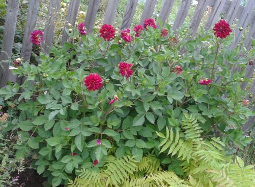 Цветы у Ликки GhyD0cbhuKc