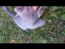 мучаю серого грызлика