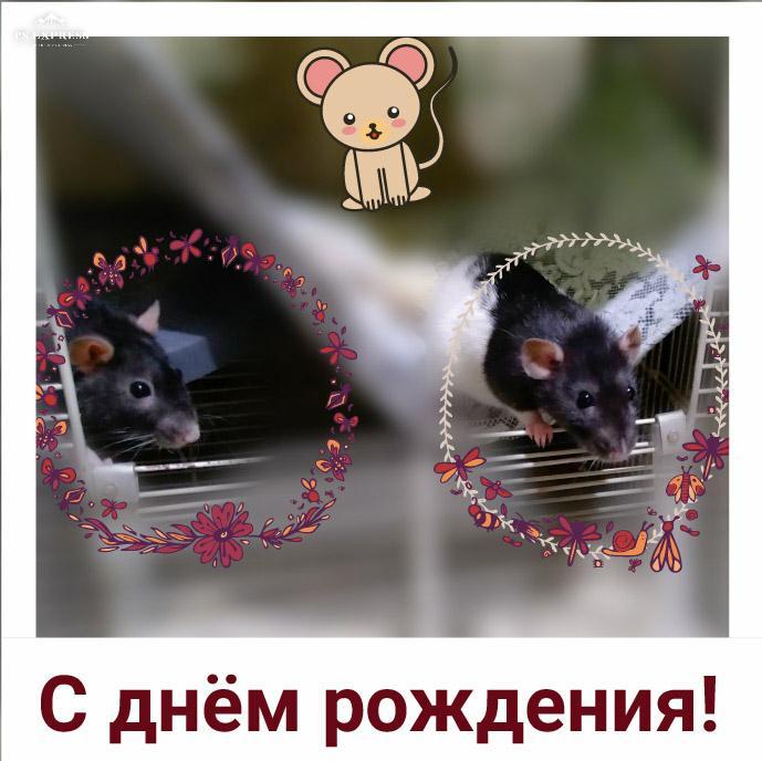 https://pp.userapi.com/c847020/v847020152/1a7172/w3FjEvhFP7M.jpg