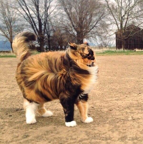 18 доказательств, что коты — многогранные личности: ↪ Коротко о погоде