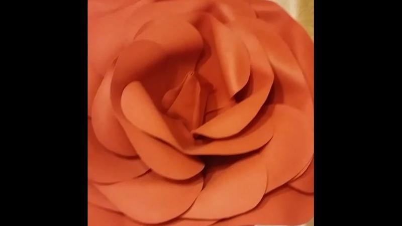 Красная и чёрная роза