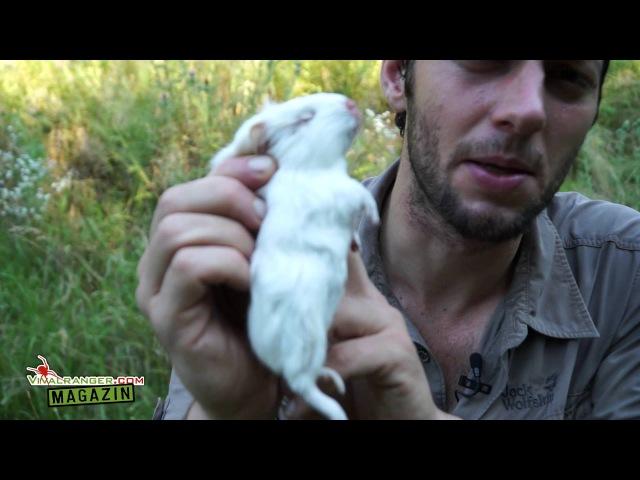 Snippet Killzone - Wie Du ein Säugetiers richtig tötest VRMag 2 (Doku)