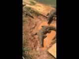 Куба, кормление крокодилов