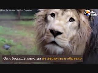 Эмоции животных, которые вышли на свободу из цирка