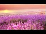 Healing music Piano Calming music Soothing music Sleeping music Relaxing Nature