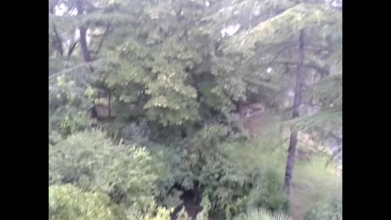 Video-2014-08-05-07-06-